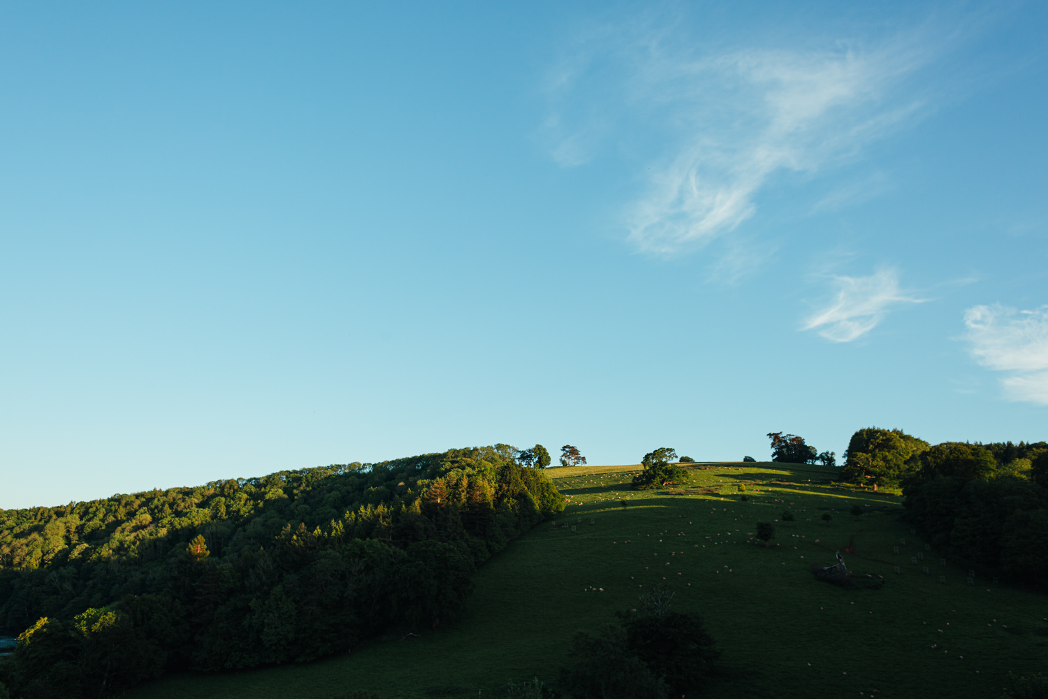 landscape of the hill surrounding sharpham gardens