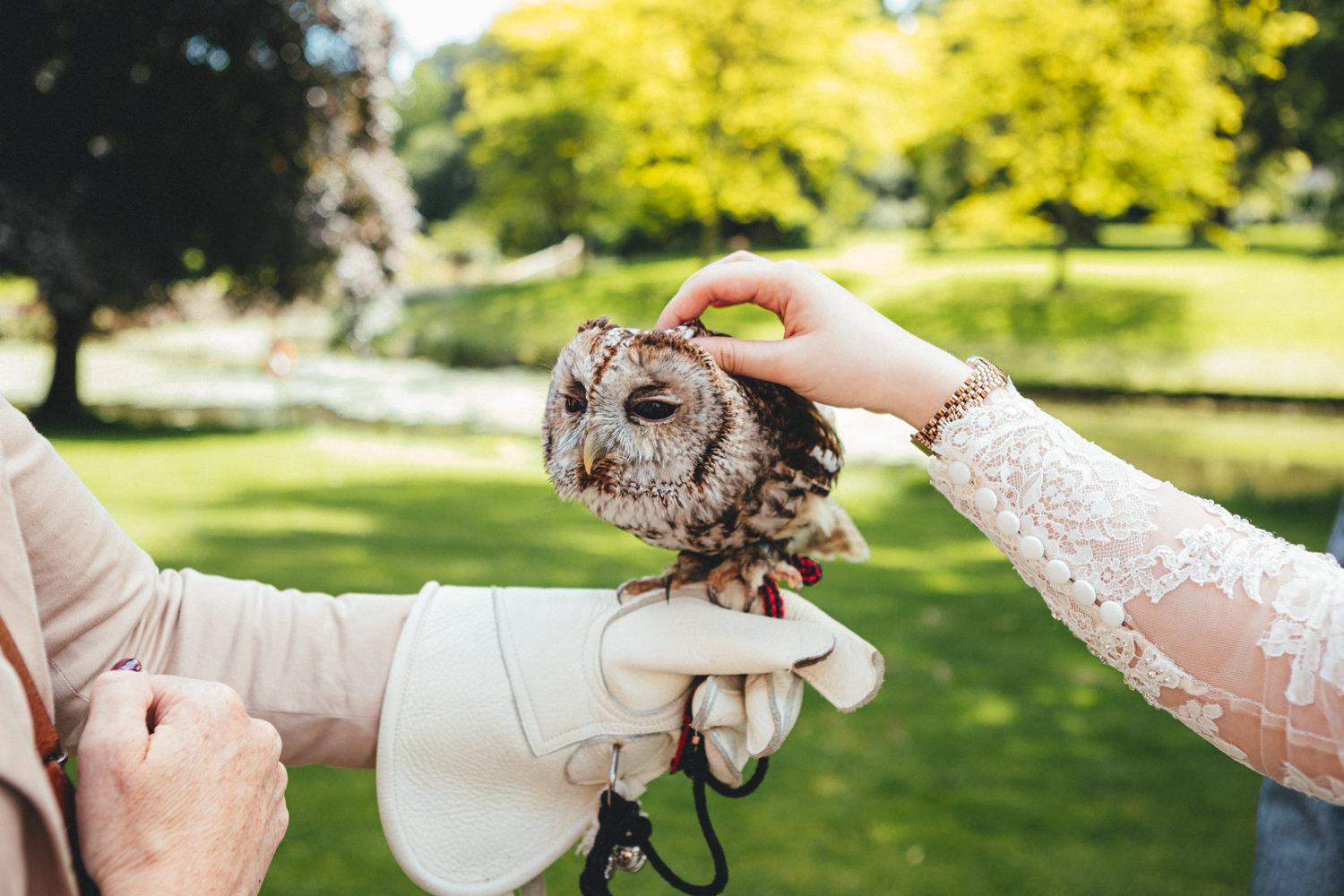 wedding owls, owls & wedding guests
