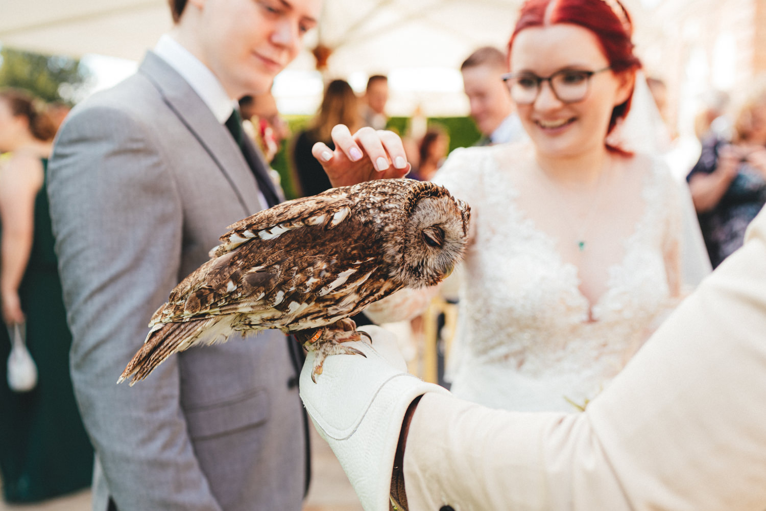 wedding owls, owls & wedding guests, bride & groom with owl