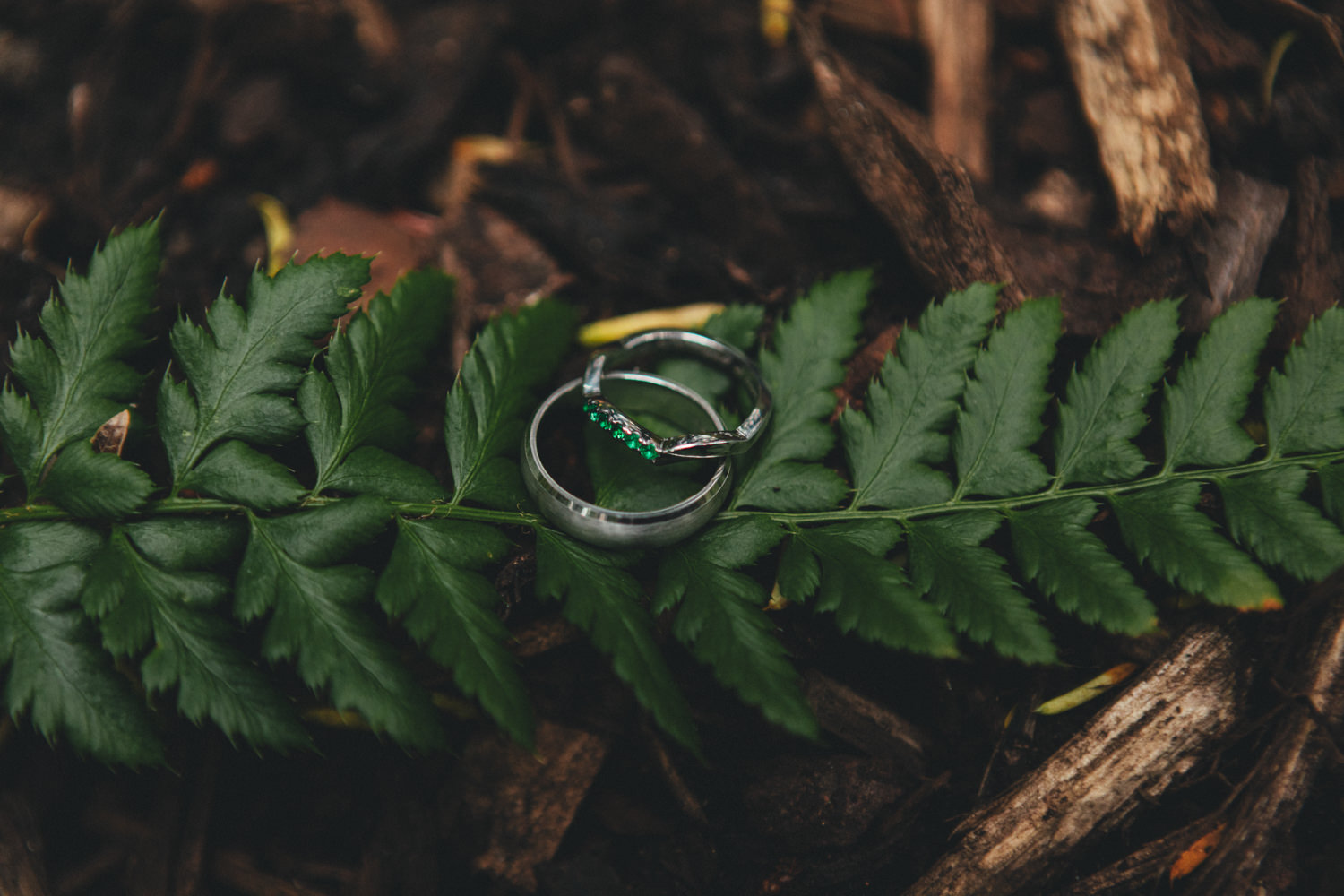 Quirky Woodland Wedding Photography, wedding rings on a fern, woodland wedding, wild woodland wedding
